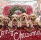 Doggie treats for Christmas