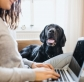 Why You Should Use A Professional Dog Walker-Even If You Work From Home